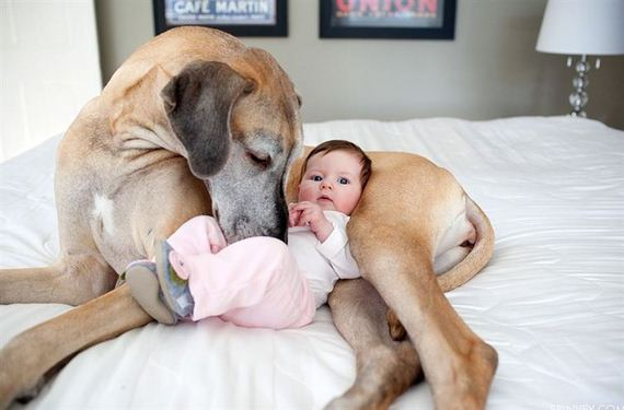18-Gentle-Giant-Dogs