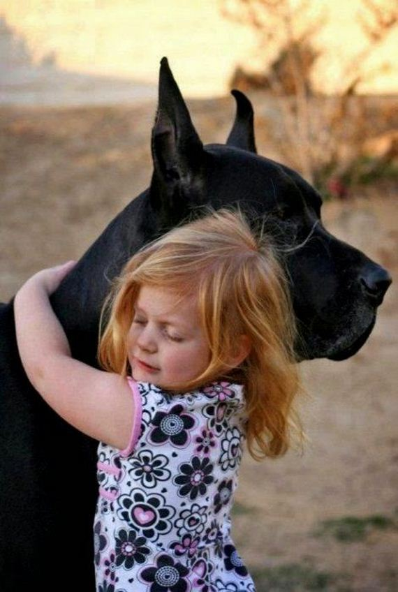 Gentle Giant Dogs Being Absolutely Adorable With Little Kids