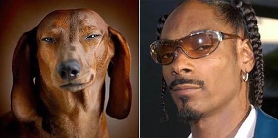 Dogs That Have An Uncanny Resemblance To Something Else