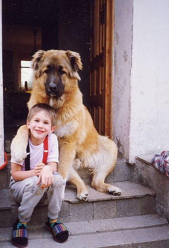 20-Gentle-Giant-Dogs