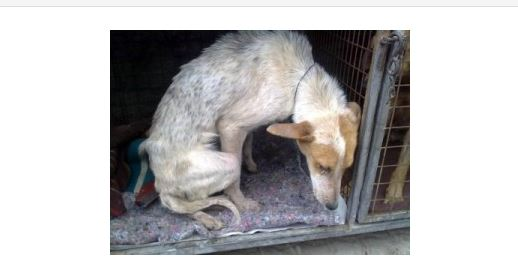 Miracles Do Happen – Dog Buried Alive Comes Back to Live Happily Ever After