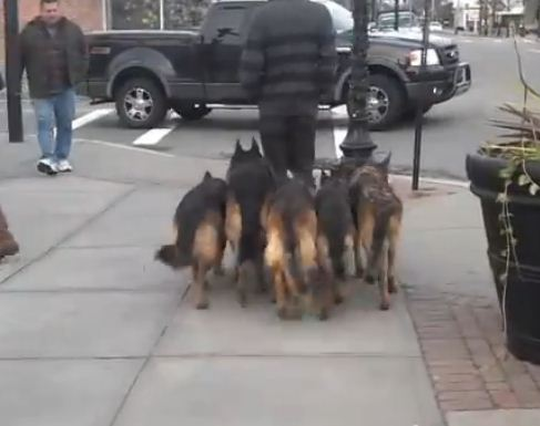 This Guy Walks His Dogs In The Street In The Most Shocking Way