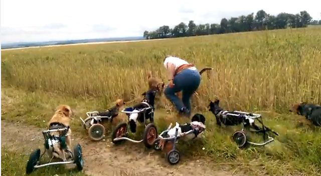 These Cute Dogs Don't Let Their Wheelchairs Stop Them From Playing Fetch With Their Pals