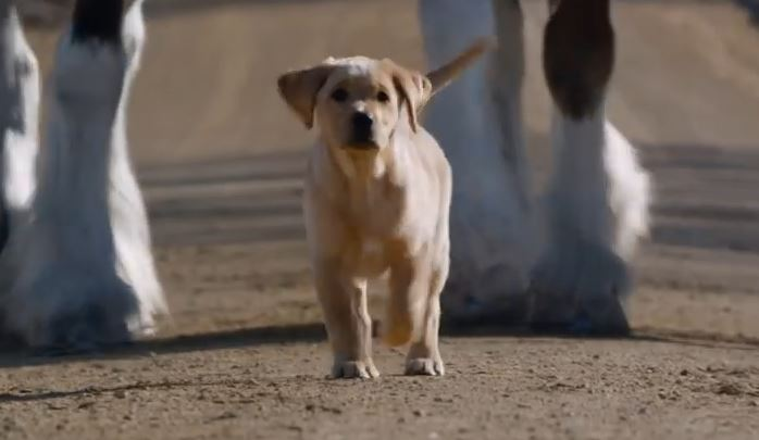 This Puppy Keeps Running Away From Home – For One AMAZING Reason!!