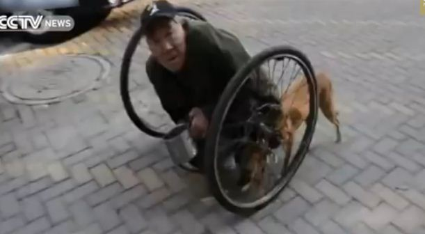 Your Jaw Will Drop When You See How This Dog Helps This 86 Year-Old Disabled Man