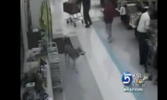 """CAUGHT ON VIDEO: It's Christmas, And This Dog Decided to Help Himself To a """"Gift"""""""