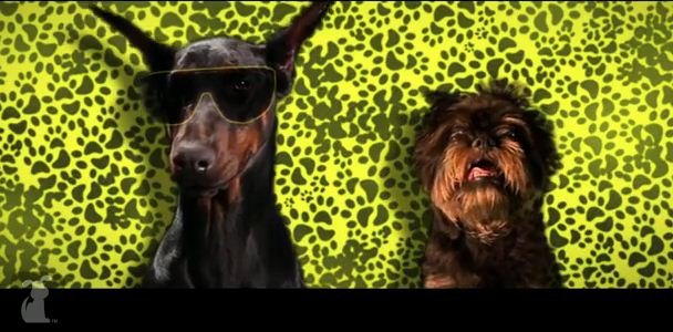 """Have You Seen This Dog Version of Snoop Dogg's """"Wiggle"""" Song?"""