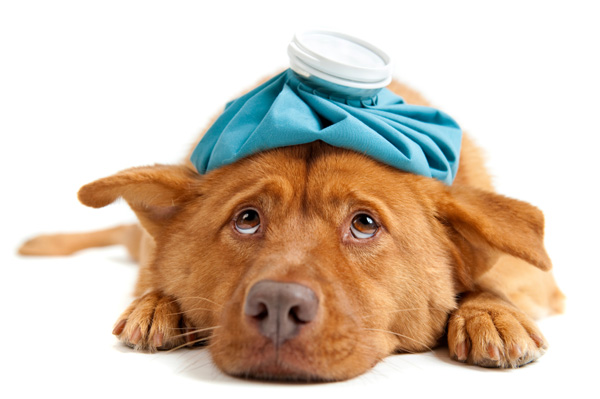 How to know if Your Dog is Sick?