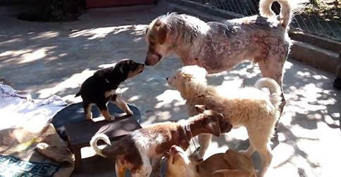Puppies Help A Rescued Dog Heal His Broken Heart After A Near-Death Experience