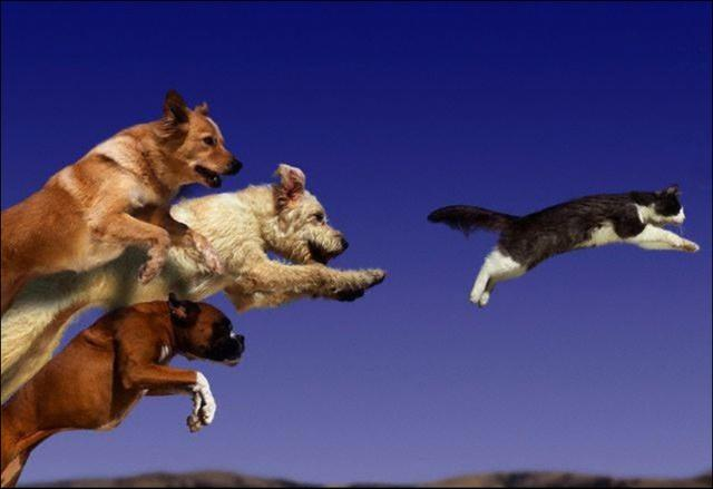 5 Things Dogs Chase and Why