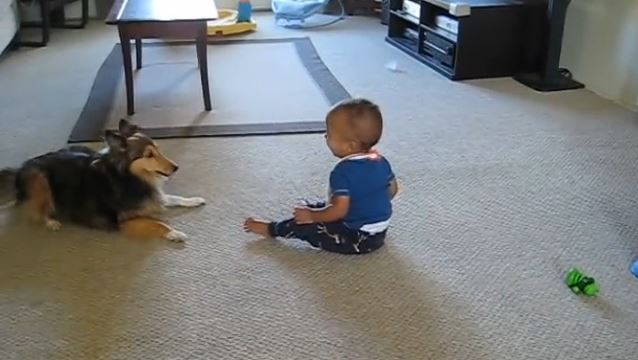 This Dog Can Do Anything to Make the Baby Laugh