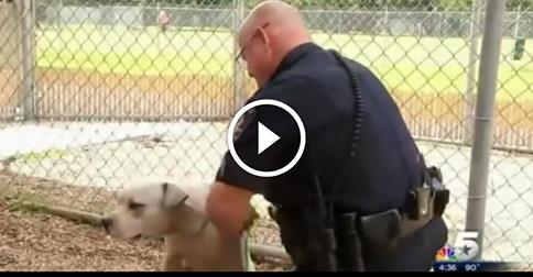 Police Officer Responds To A Call About A 'VICIOUS' Pit Bull. What He Does Next Amazed Me