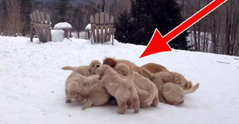 There's Something Hiding in This Pile Of Puppies, And It's The Cutest Thing Ever
