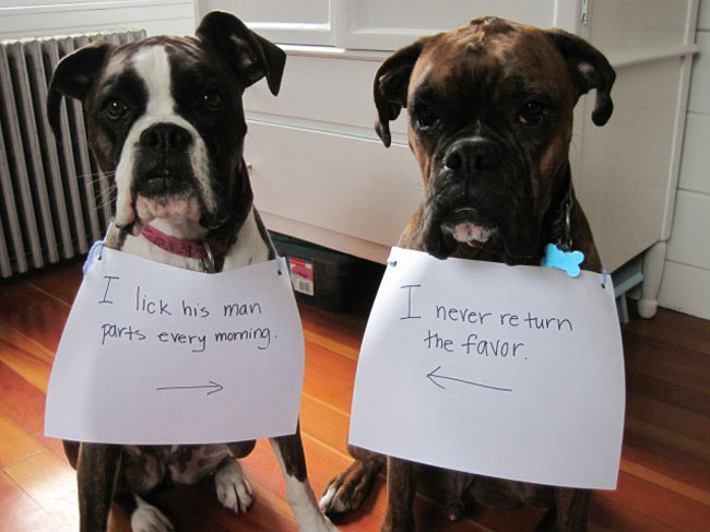 These 30 Dogs Were So Disgustingly Naughty That They Need Publicly Shamed. This Is Hysterical.