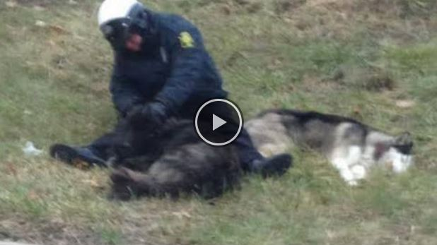This Police Officer Became A Hero With His Simple Act Of Animal Kindness