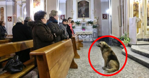 This Dog's Owner Passed Away, His Reaction Touched Everyone's Hearts