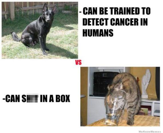 01-Cats-Vs-Dogs