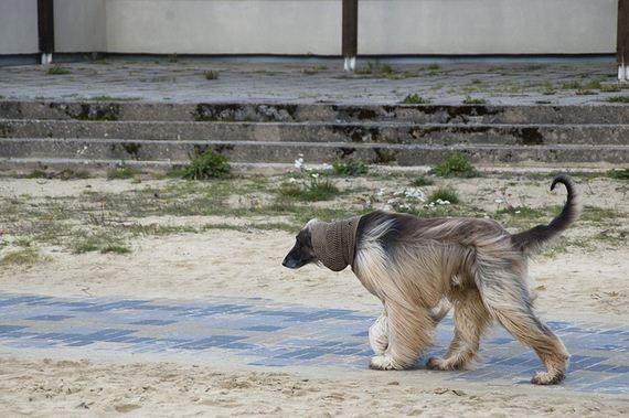 01-Obedient-Dog-Breeds