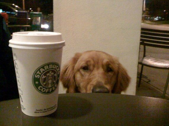 01-Restaurants-Coffee-Shops-Dogs