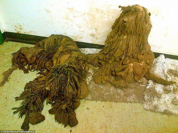 The Transformation of These Neglected Dogs Will Shock You
