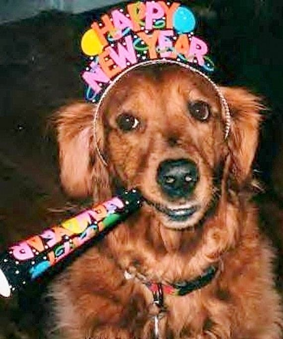 02-New-Years-Dogs1