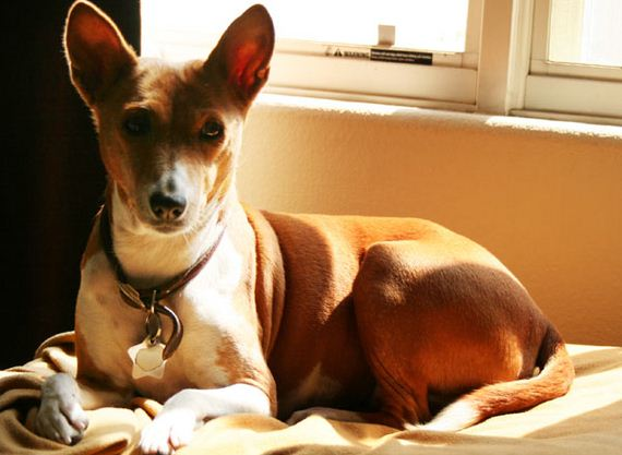 03-Obedient-Dog-Breeds