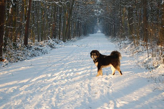 03-Protective-Dog-Breeds
