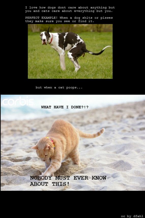 04-Cats-Vs-Dogs