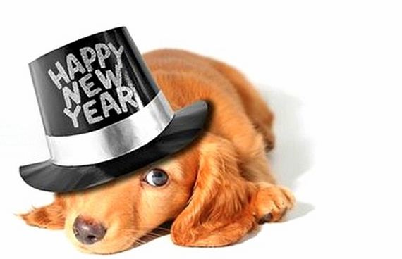 04-New-Years-Dogs1