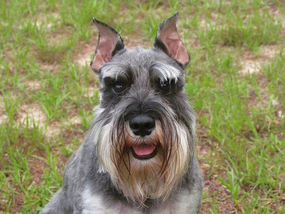 04-Protective-Dog-Breeds