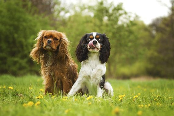 The 10 Least Hyper Dog Breeds