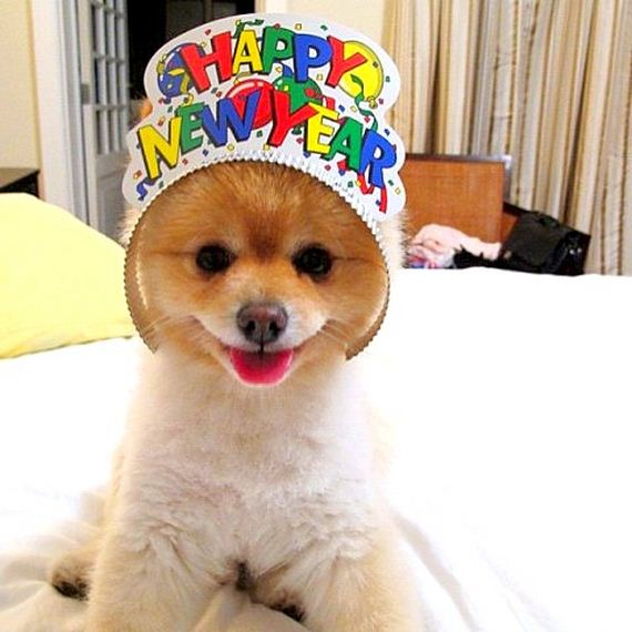 05-New-Years-Dogs1