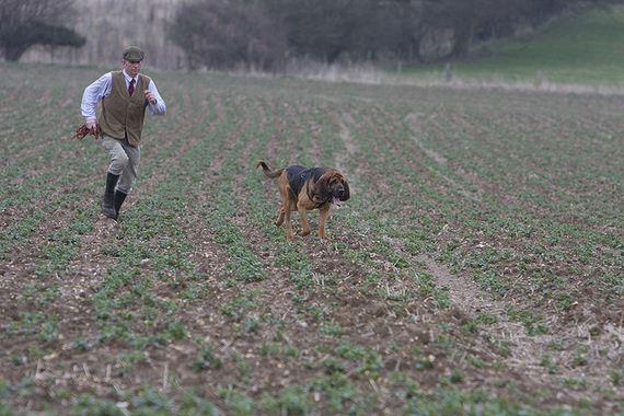 05-Obedient-Dog-Breeds