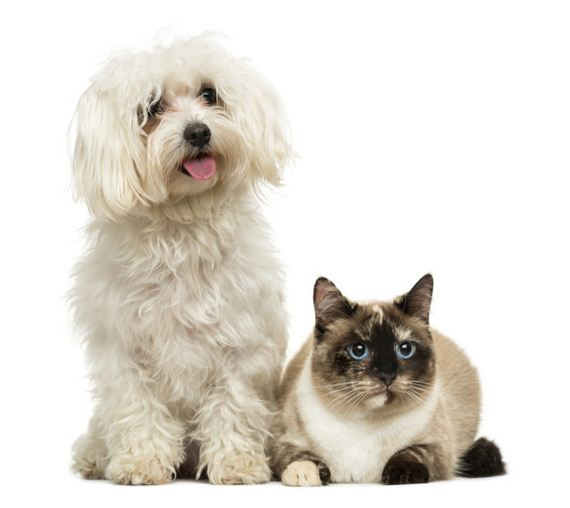 06-Cat-Friendly-Dog-Breeds