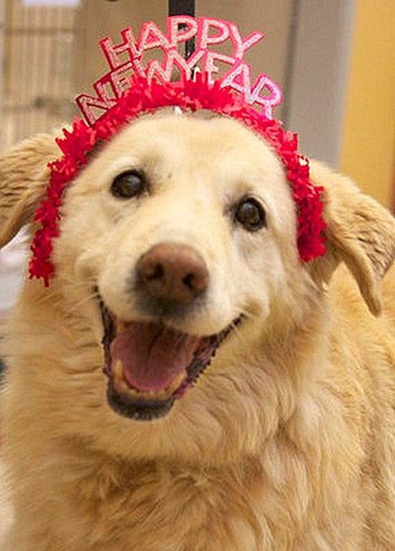 06-New-Years-Dogs1