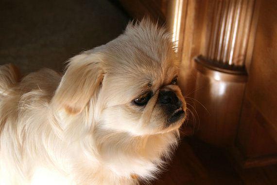 06-Obedient-Dog-Breeds