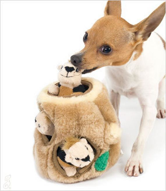 Best Small Dog Toys : The best toys for small dogs ilovedogsandpuppies