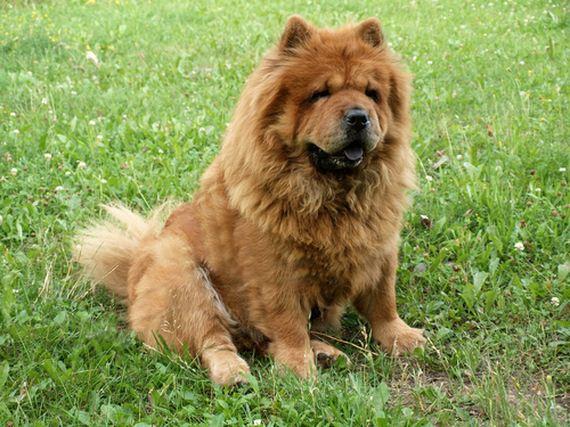07-Least-Hyper-Dog-Breeds