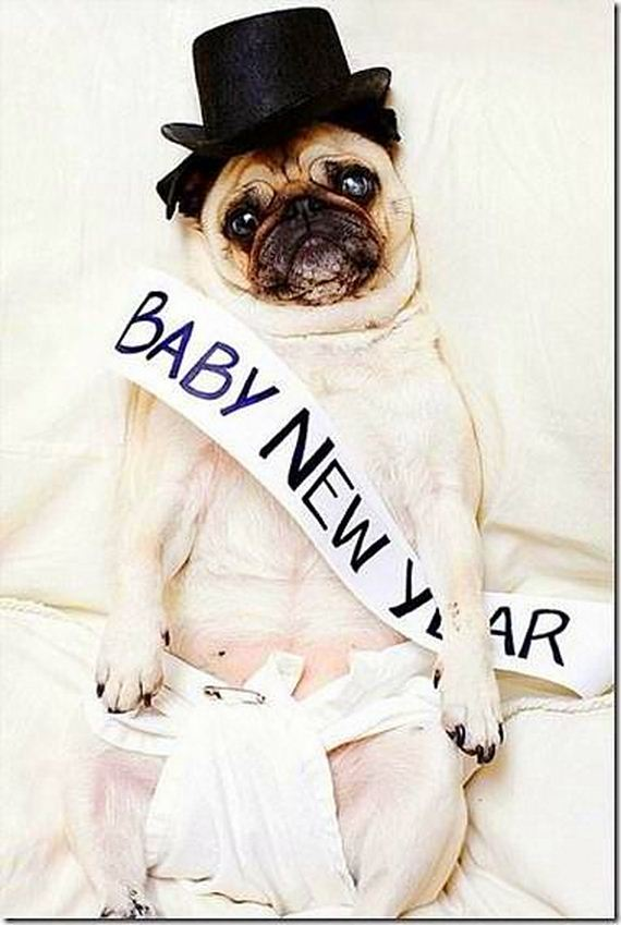 07-New-Years-Dogs1