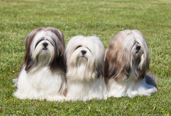 08-Least-Hyper-Dog-Breeds