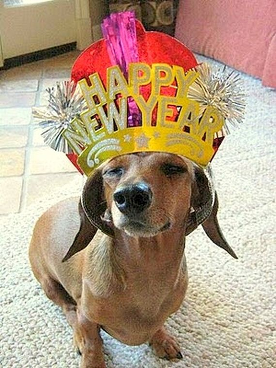 08-New-Years-Dogs1