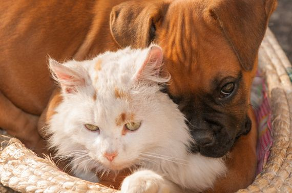 09-Cat-Friendly-Dog-Breeds