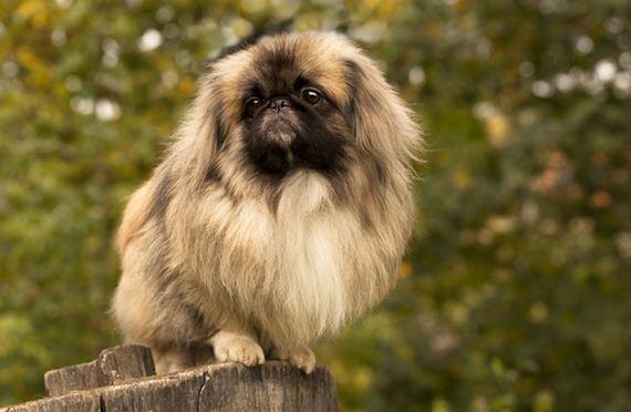 09-Least-Hyper-Dog-Breeds