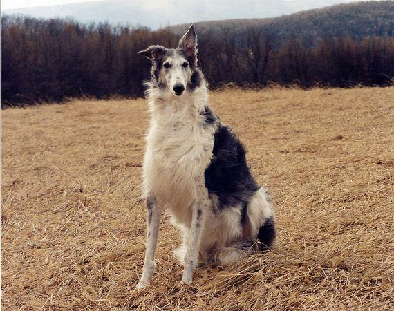 09-Obedient-Dog-Breeds