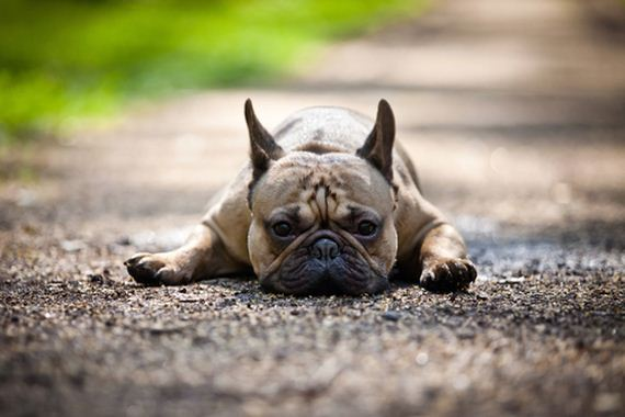 10-Least-Hyper-Dog-Breeds