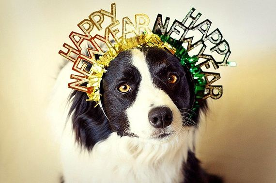 10-New-Years-Dogs1