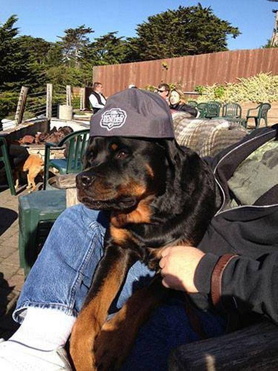 10-Restaurants-Coffee-Shops-Dogs