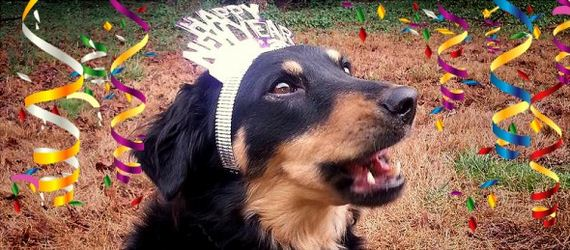 11-New-Years-Dogs1