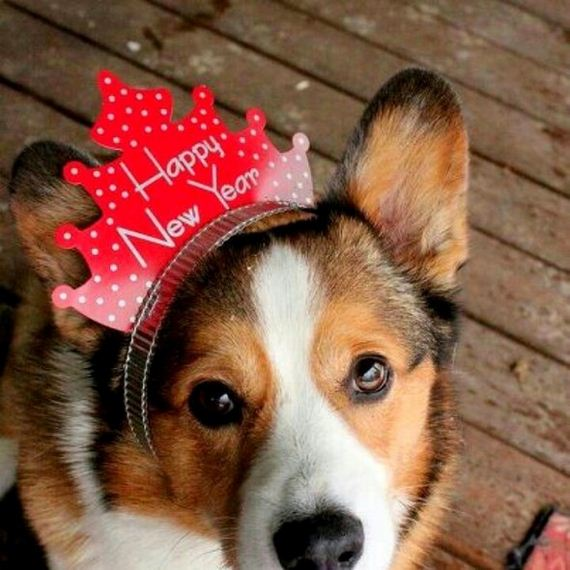 12-New-Years-Dogs1