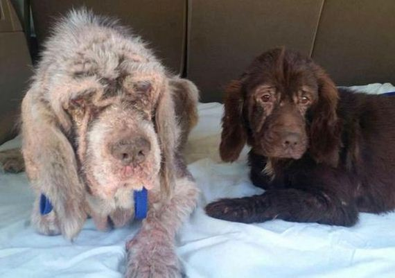 Rescued Dog Becomes Guide for Blind Canine Companion